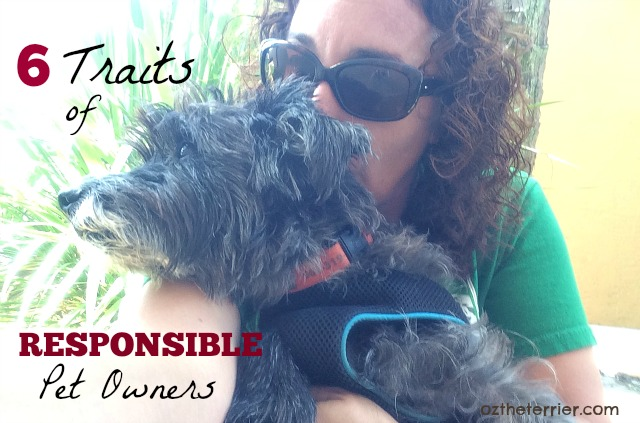Oz the Terrier 6 Traits of Responsible Pet Owners #BeSleepypodSafe