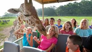 Six Flags Wild Safari, New Jersey