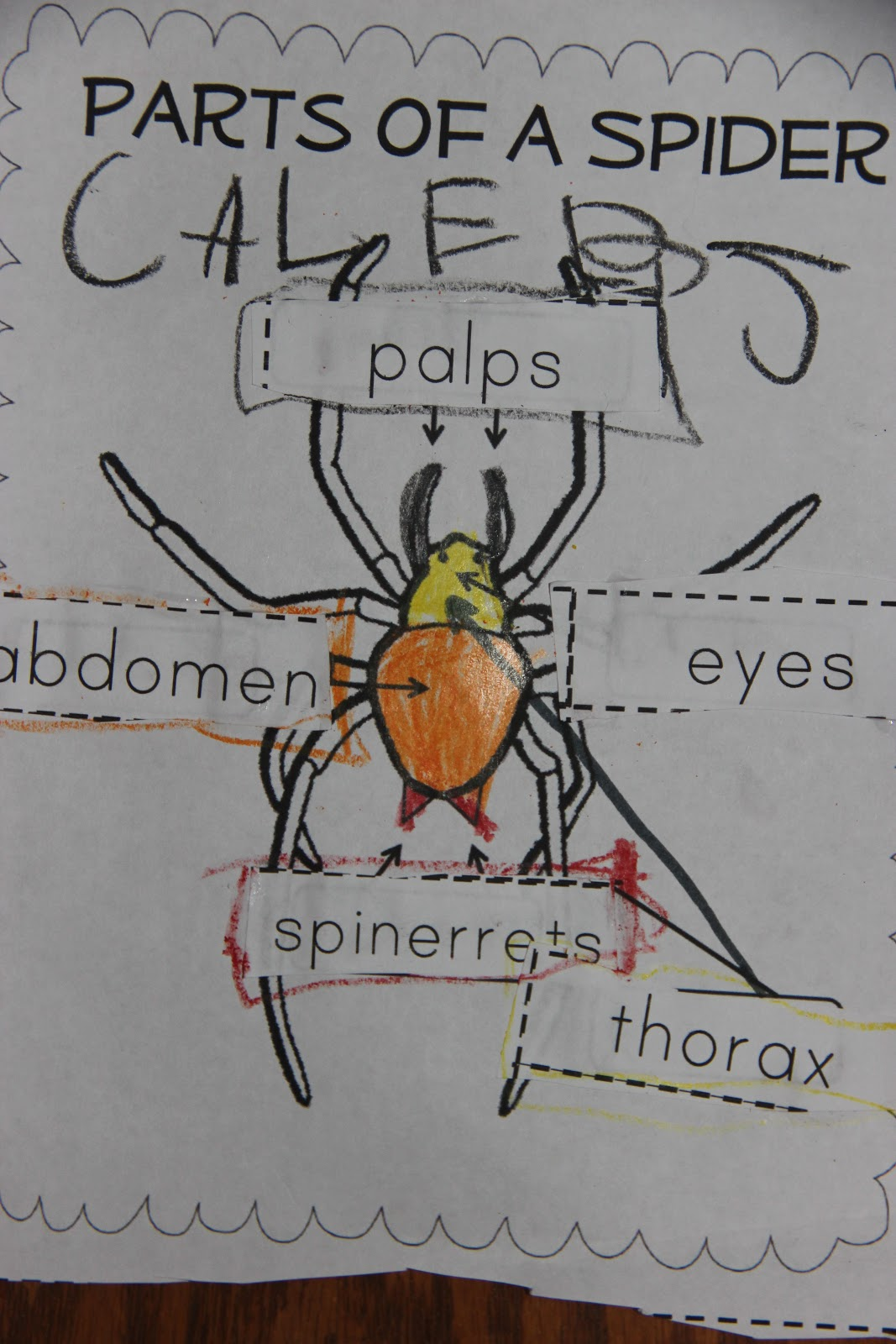 The Johnson Journey Unit Theme Spiders