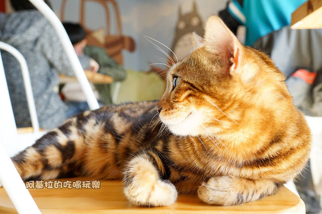 16819379 1232020363517873 1478707435680400689 o - 西式料理|貓爪子咖啡 Cat's Claw  Brunch & Cafe'