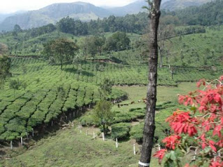 Visit Munnar for vacation