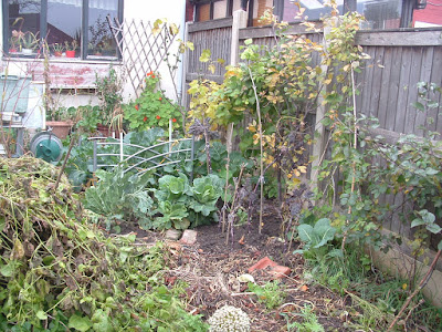 A garden bed with various brassicas growing