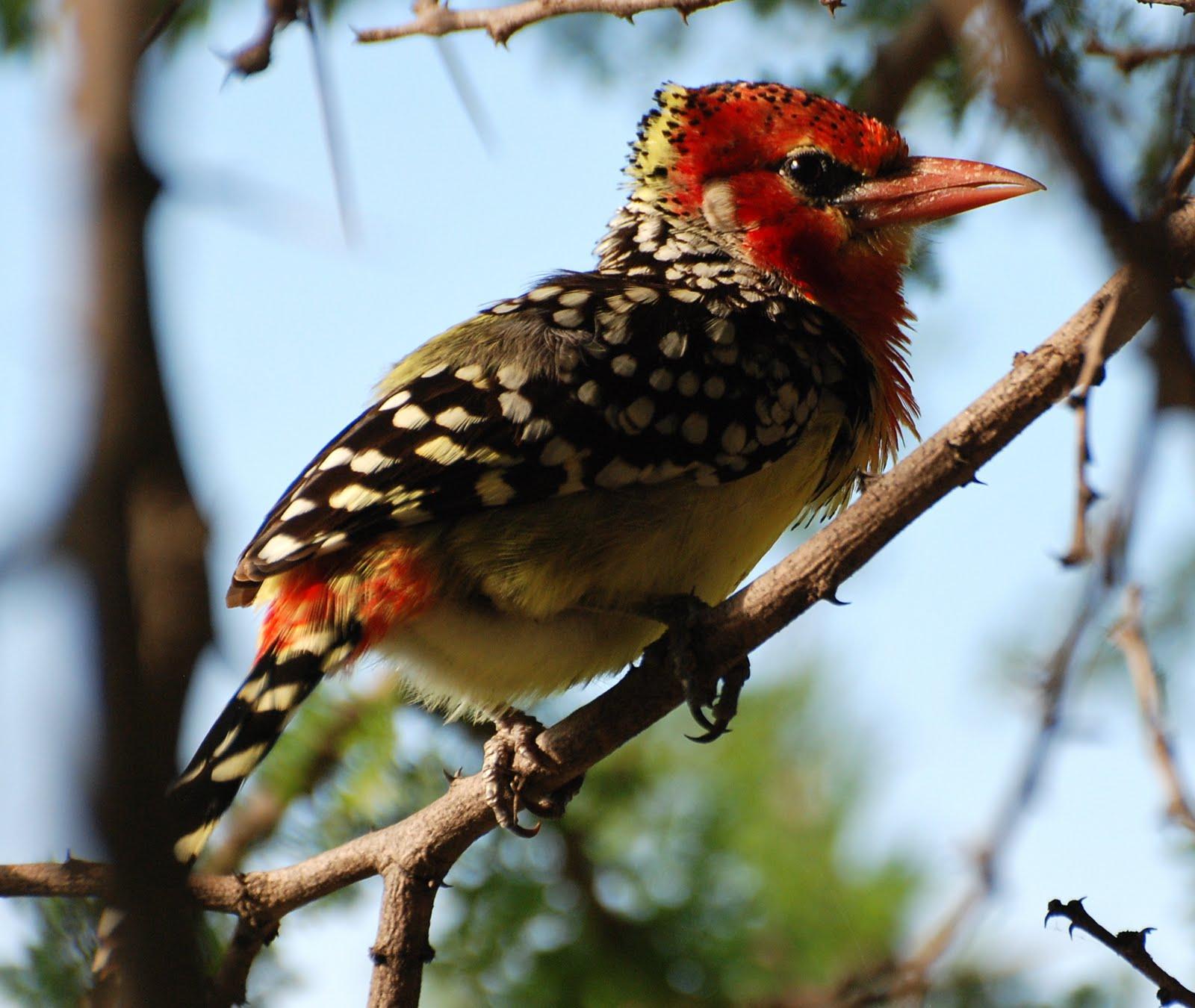 Birds: Birding Tanzania: Birds Of Tanzania