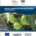Libros gratis: Manual tecnico del cultivo de tomate .- pdf.
