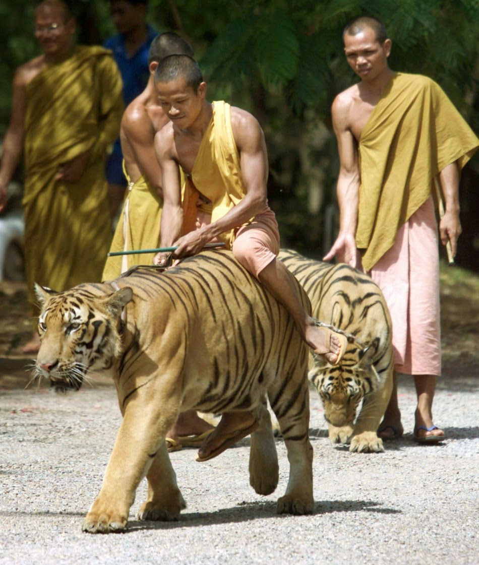 Tiger Temple Thailand History in Hindi