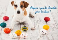 Danger du chocolat pour les chiens