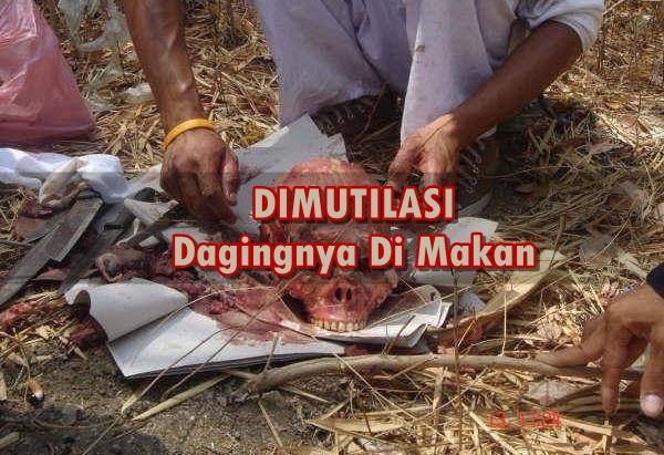 Foto-Foto MUTILASI ini, Seperti Kasus Ibu Bunuh Anaknya Lalu Di Sajikan Di Meja Makan
