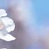 四季特輯 春天賞櫻、賞花、慶典資訊 (3~5月)