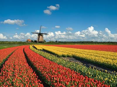 Geografi Negara Belanda