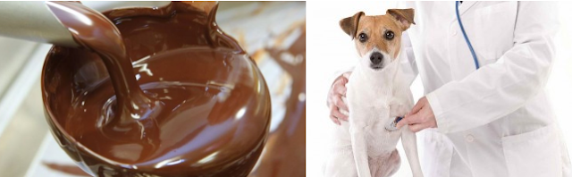 köpekler için ölümcül gıdalar