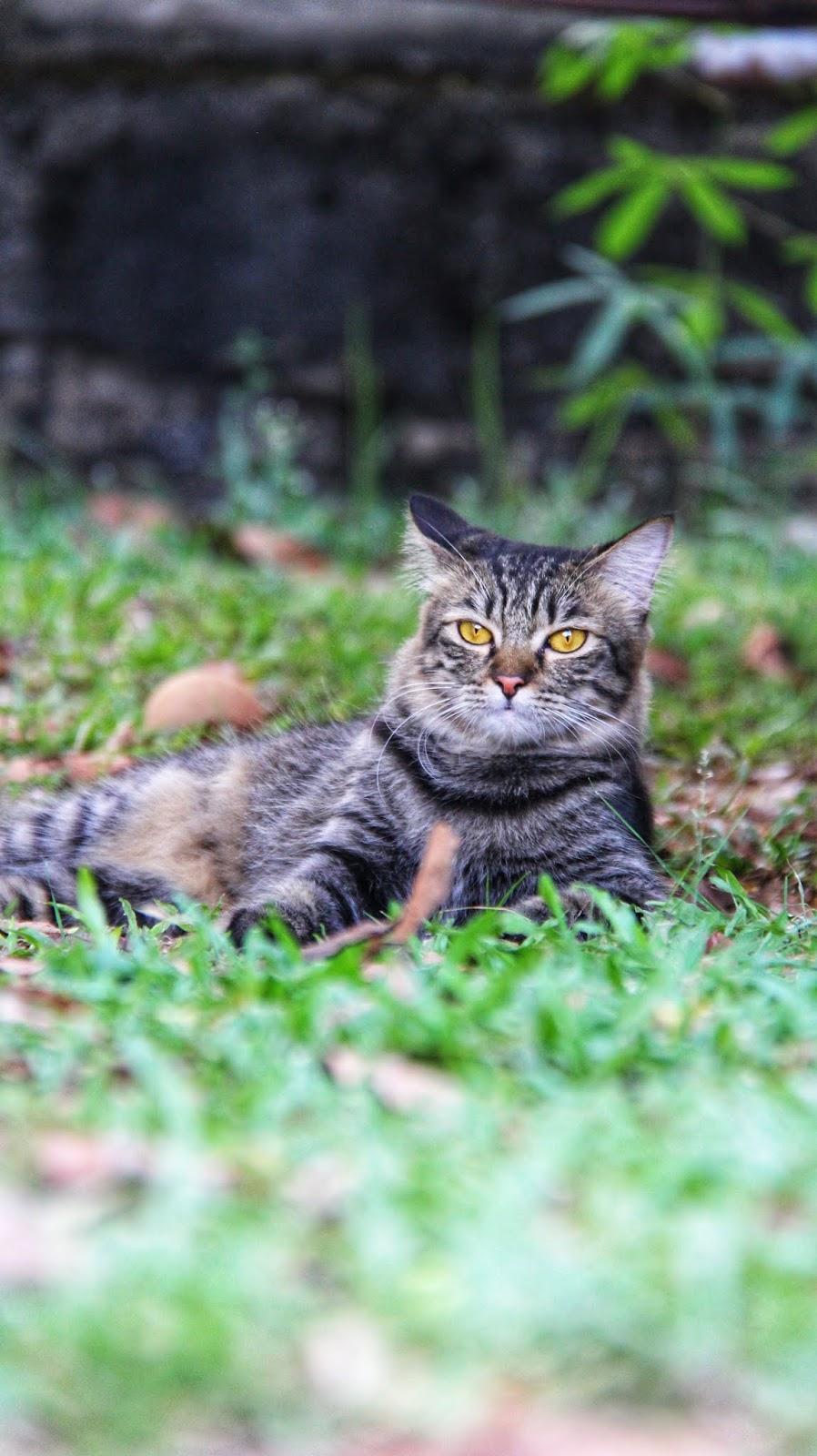 20 Koleksi Gambar Kucing Comel Bernama Tambi  2