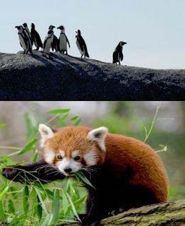 Mengenal algoritma google penguin dan panda.