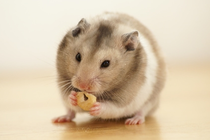 How to feed the hamster, hamster food, Fruits and vegetables