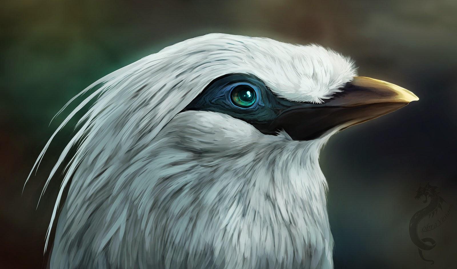 Kumpulan Gambar Sketsa Burung Pleci