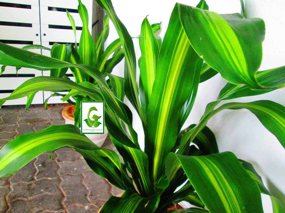 Seeds For Sale Online: RARE FLOWER seeds / plants ...
