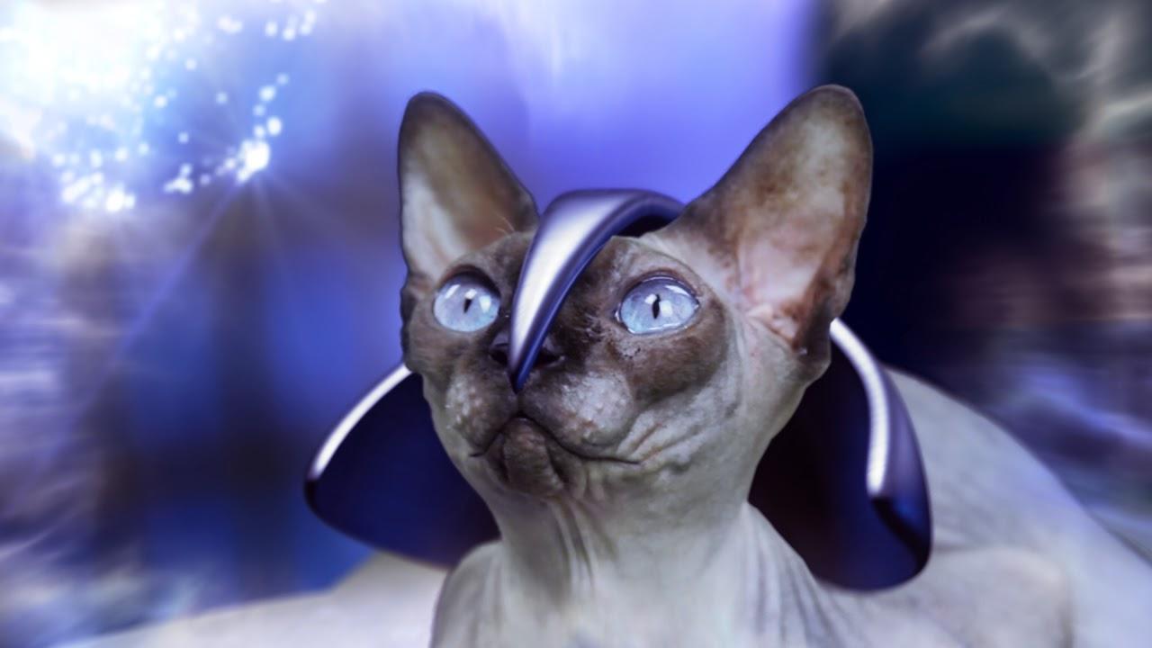 http://www.kaipojones.com/2014/07/professor-x-cat.html