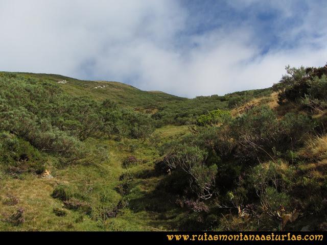 Ruta Pico Cellón, pradera hacia Entrambospuertos