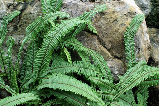 jenis tanaman pengisi yang biasa di gunakan pada taman vertikal