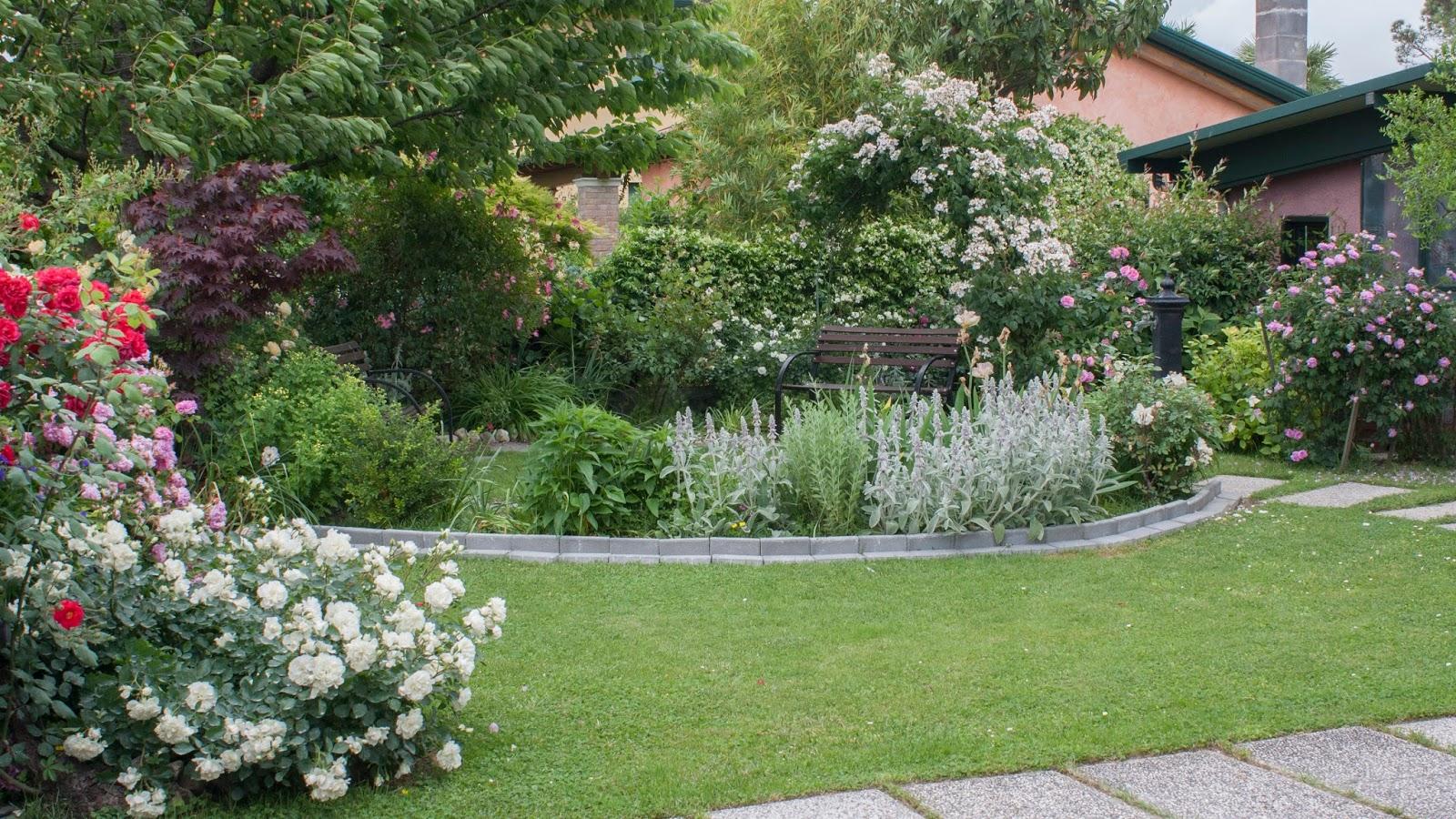 Il piccolo giardino di l rose rose e rose in una - Giardino con rose ...