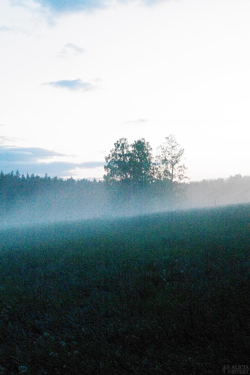 uttersberg dimma fog dusk skymning sommarkväll sommarnatt kväll äng