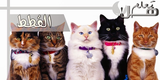 520a9734f معلومات وحقائق عن القطط