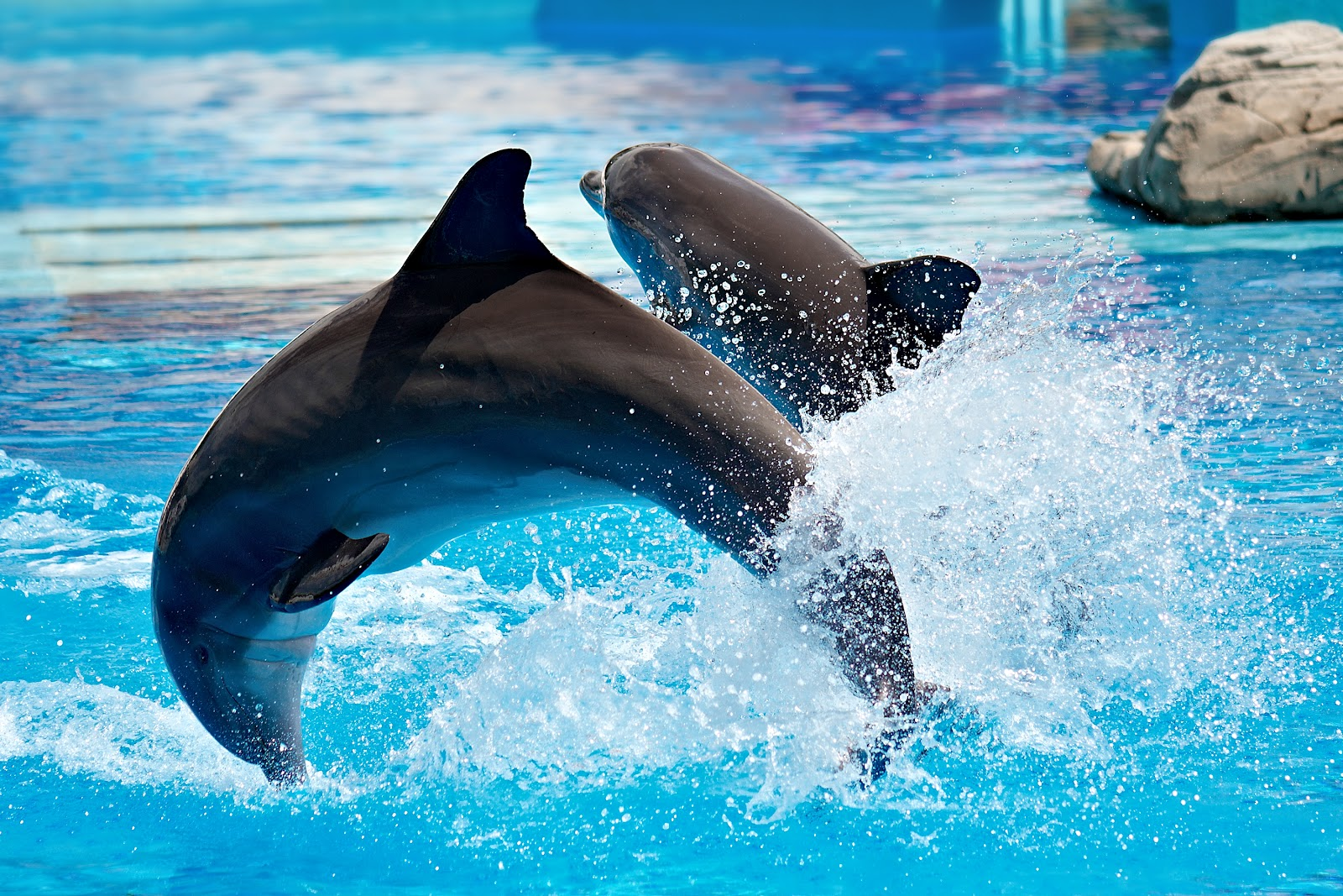 Dolphins | HD Wallpapers (High Definition) | Free Background
