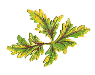 leaves leaf digital botanical download image art