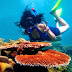 Paket Wisata Karimunjawa Tour Travel Open Trip 2020