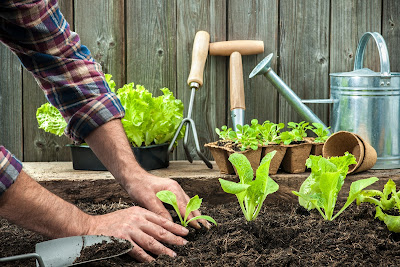 Avoiding Aches & Pains from Spring Gardening - El Paso Chiropractor