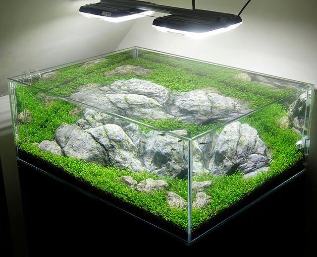 Aquascape Diyaquarium Lighting For Planted Tanksaquarium