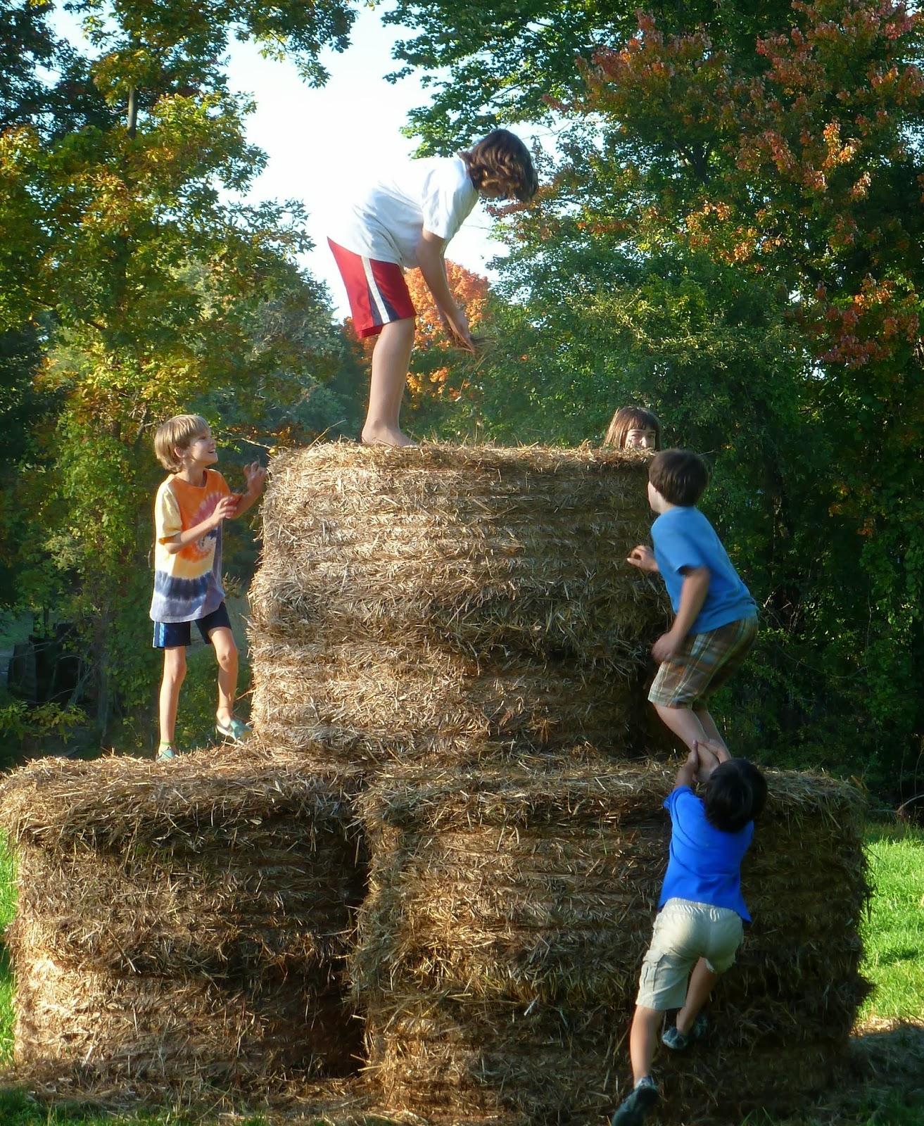 Fantastic Craigslist Little Rock Farm And Garden Images - Brown ...