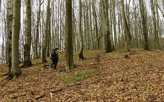 Podchodzimy zbocze porośnięte bukowym lasem.