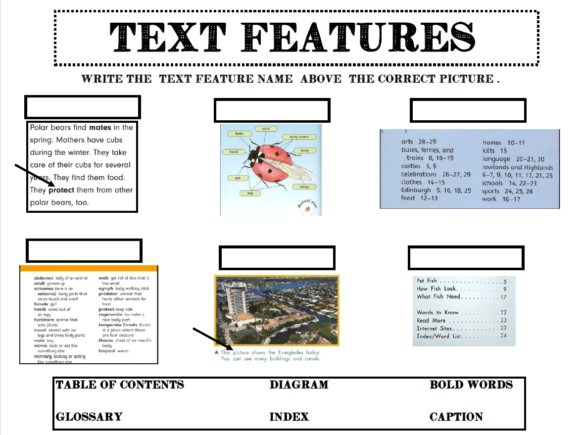 Jennifer's Teaching Tools Nonfiction and Fiction Text ...