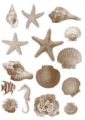 pinceles de conchas, estrellas de mar para photoshop