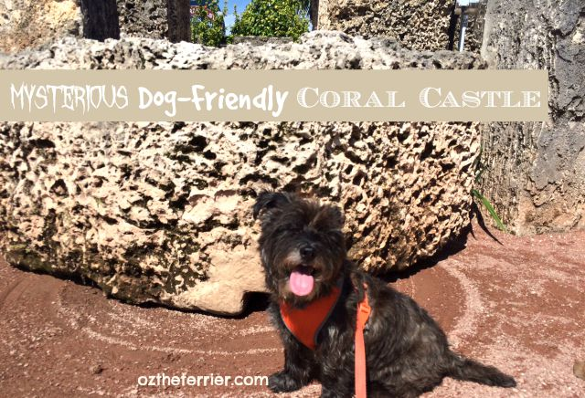 Oz the Terrier visits the mysterious yet dog-friendly Coral Castle in Miami, FL
