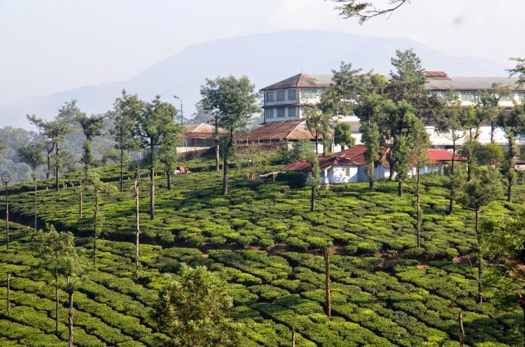 usine thé tamil nadu