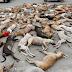 Φρίκη δίχως προηγούμενο! Δηλητηρίασαν εκατοντάδες αδέσποτα σκυλιά (Εικόνες σοκ)