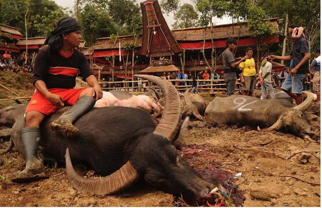 Lima Festival Kematian Paling Unik di Dunia Salah satunya dari Indonesia