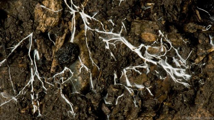 Fungos na Terra