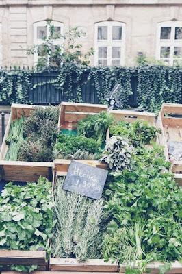 paris, spring, equinox, herbs
