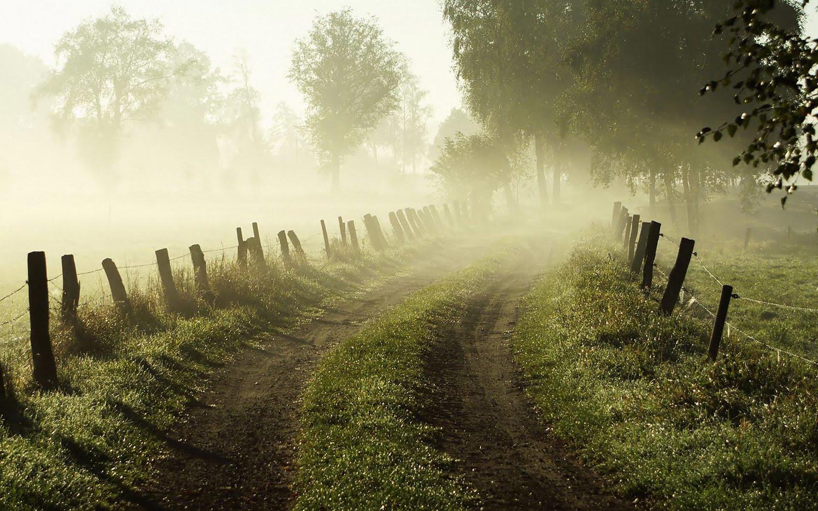 Mavis Fitzpatrick Fog Wallpaper