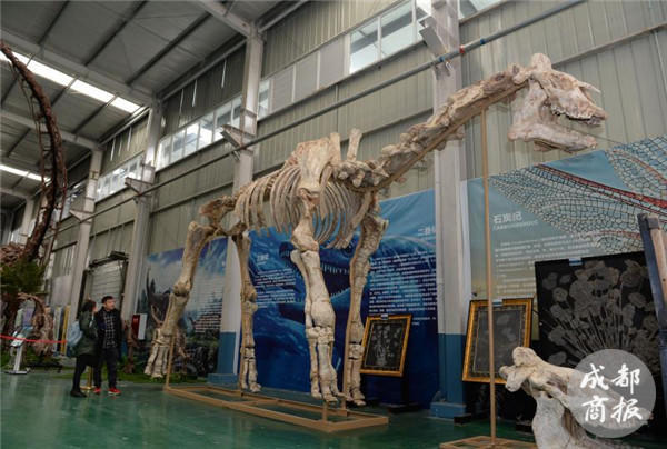 Fossils of a 20 million-year-old giant rhino restored in SW China