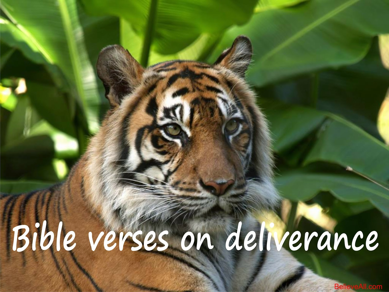 Bible verses on deliverance | BelieveAll Com