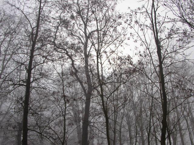 park, drzewa, poranek, gałęzie
