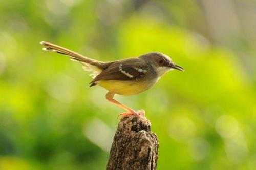 94+  Gambar Burung Yang Gampang  Terbaik Free