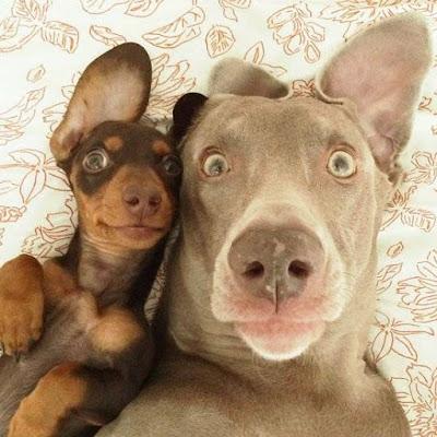 selfie original
