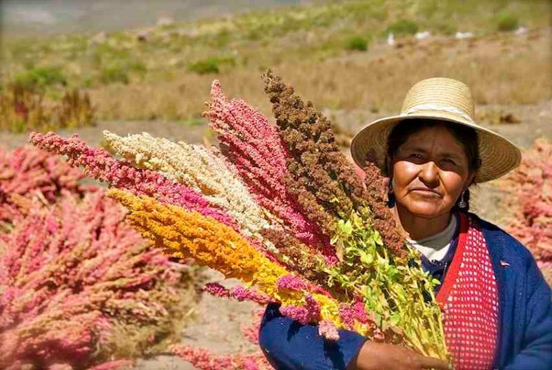 Produtora de quinoa na Bolívia