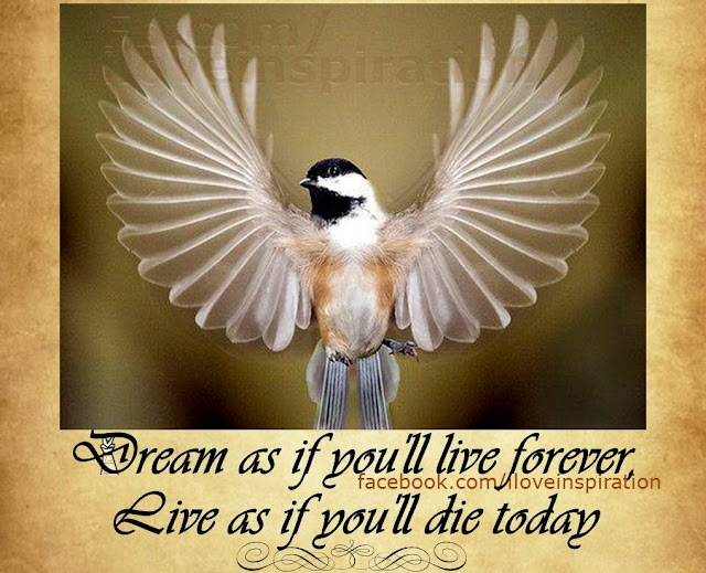 Dream Forever, Live today