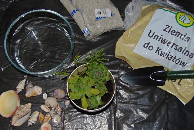 jak zrobić terrarium dla sukulentów