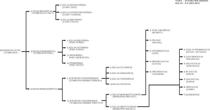 Image of: Peta Konsep Klasifikasi Kingdom Plantae tumbuhan Softilmu Pengertian Ciri Dan Klasifikasi Kingdom Plantae tumbuhan Ilmu